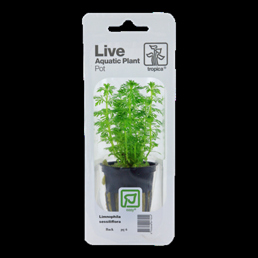 Bacopa Compact Blister